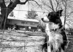 dog_oliver