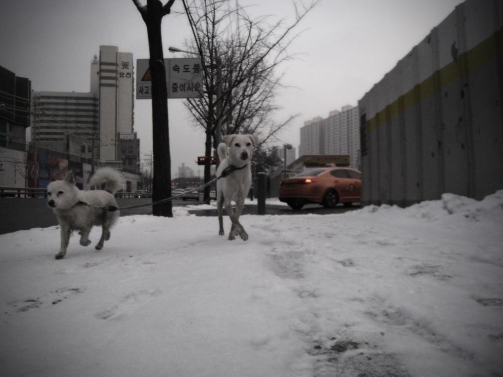 cold seoul friends