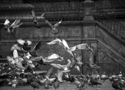 quito-pigeon-plaza