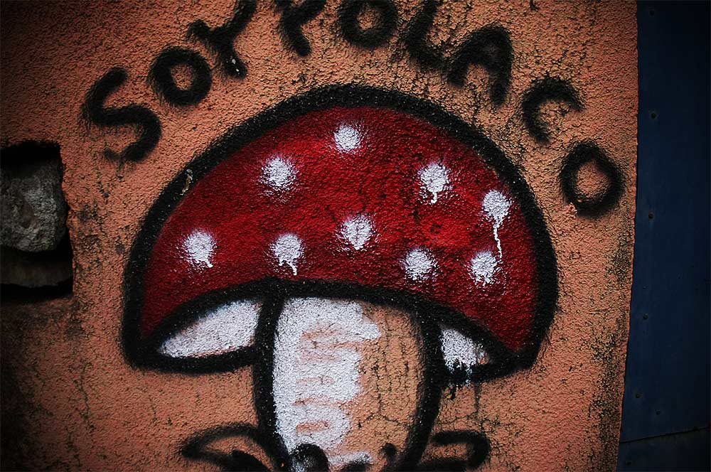 Soy Polaco Mushroom