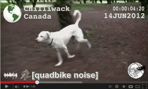 Dog chasing bike