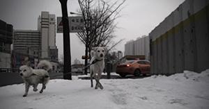 Frozen Korean winter stroll