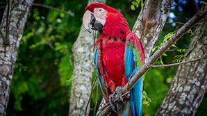 Parrot in Bonito, Brazil